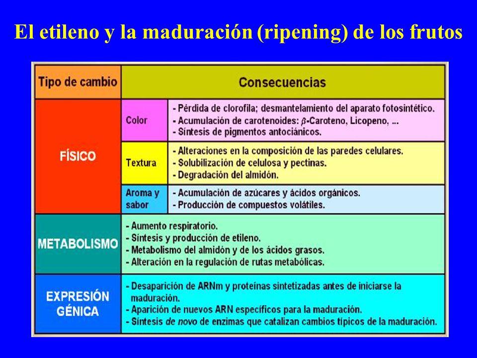 El etileno y la maduración (ripening) de los frutos