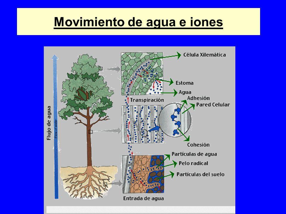 Movimiento de agua e iones
