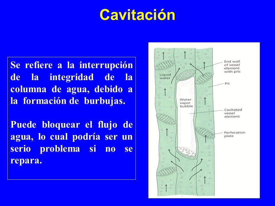 Cavitación Se refiere a la interrupción de la integridad de la columna de agua, debido a la formación de burbujas.