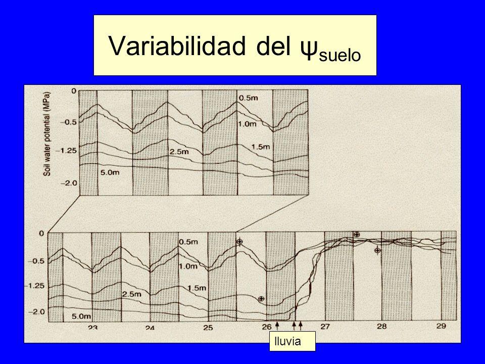 Variabilidad del ψsuelo