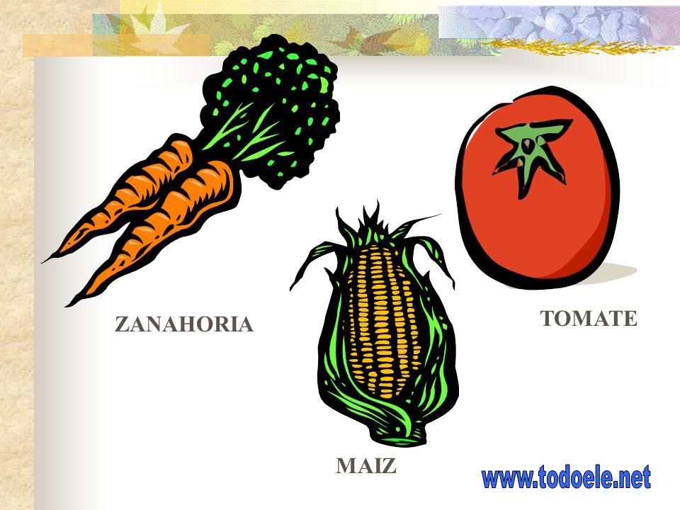 TOMATE ZANAHORIA MAIZ