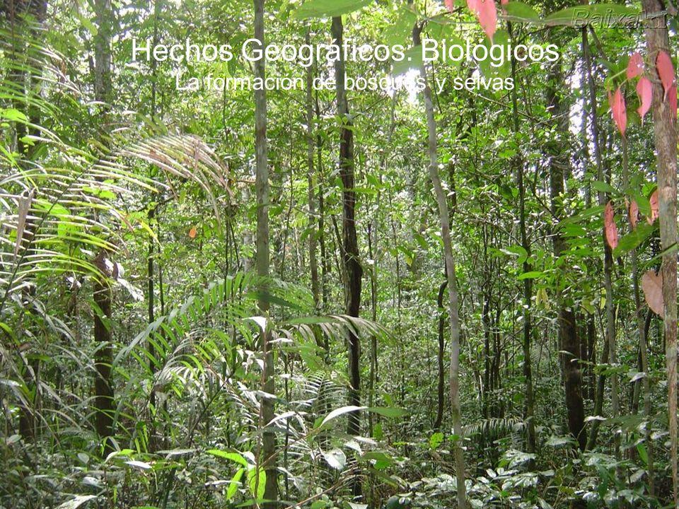 Hechos Geográficos: Biológicos La formación de bosques y selvas