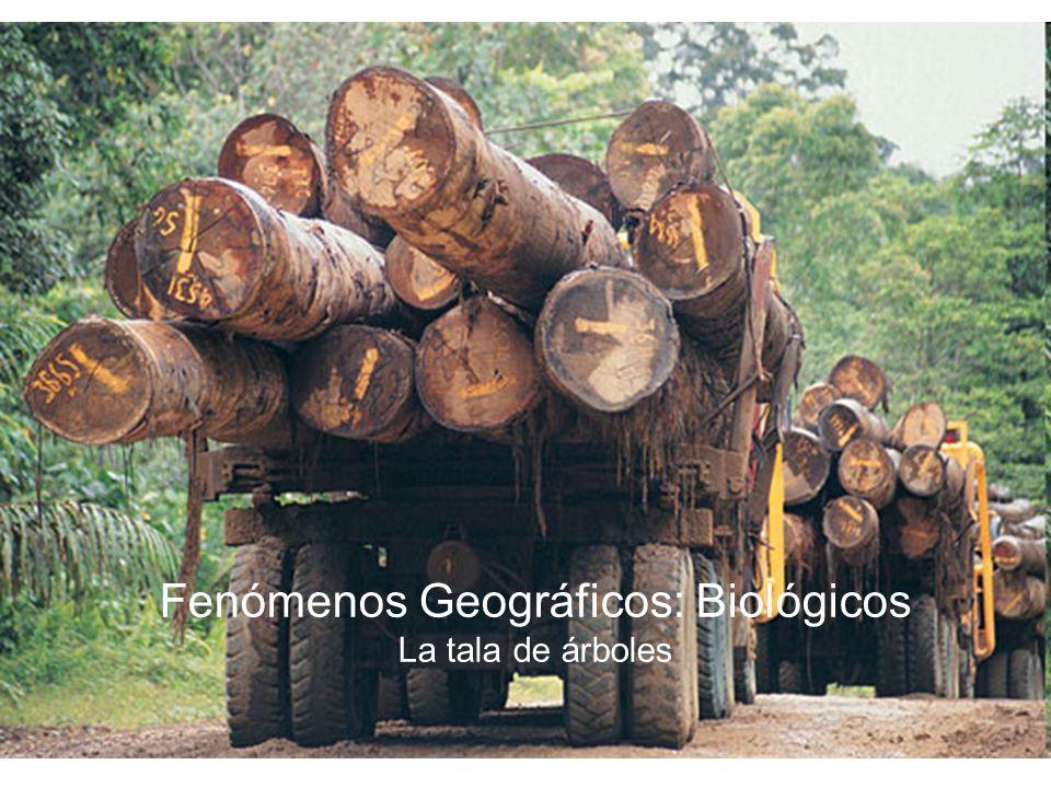 Fenómenos Geográficos: Biológicos La tala de árboles