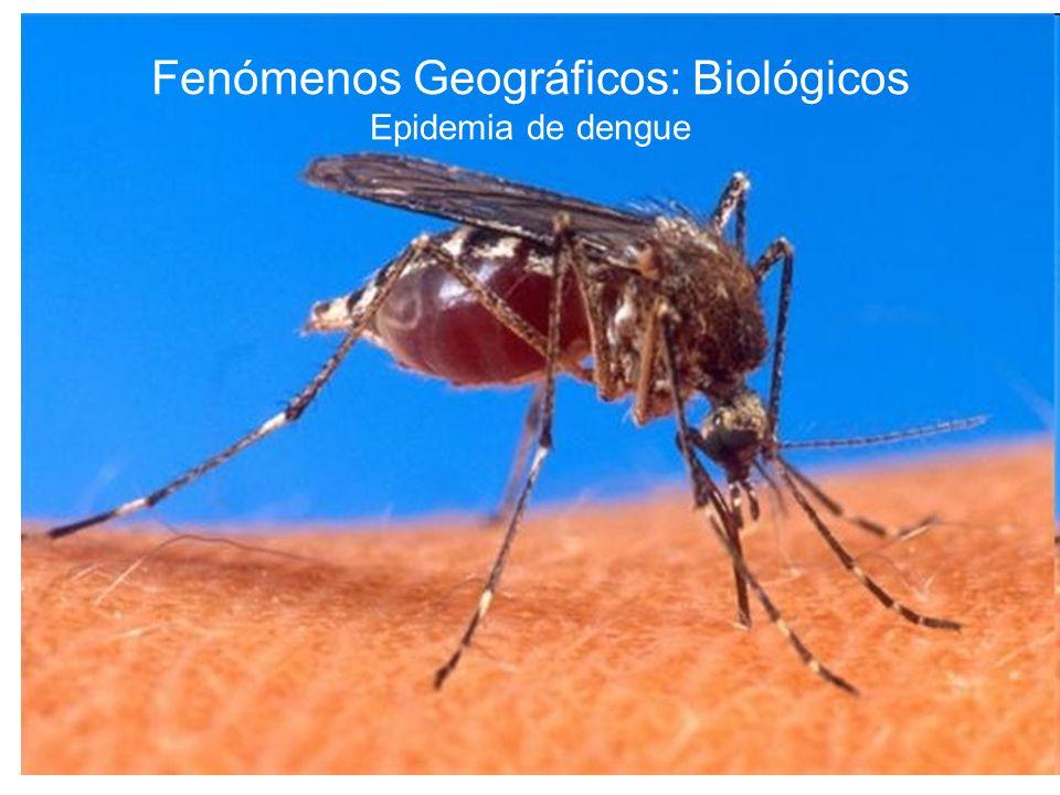 Fenómenos Geográficos: Biológicos Epidemia de dengue
