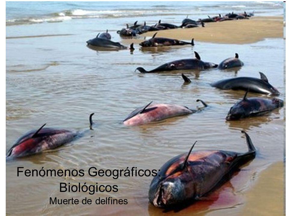 Fenómenos Geográficos: Biológicos Muerte de delfines