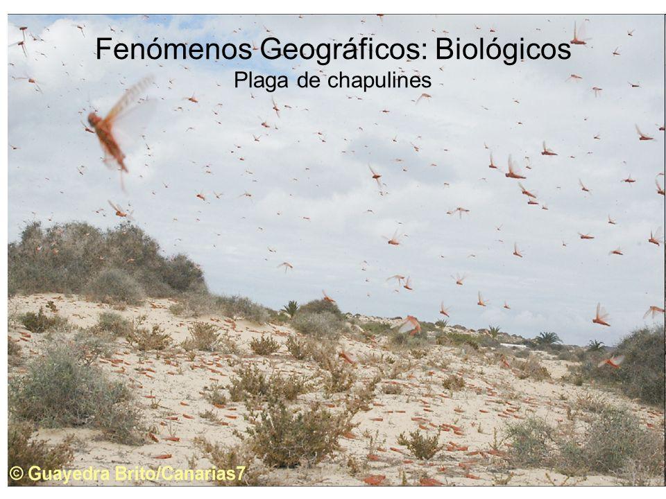 Fenómenos Geográficos: Biológicos Plaga de chapulines