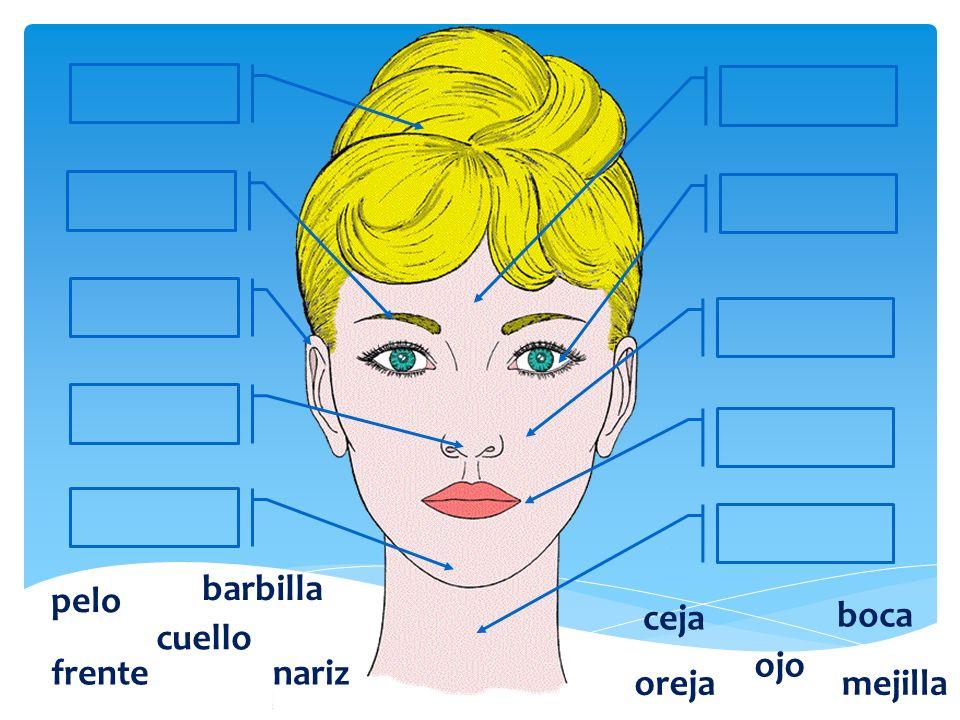 barbilla pelo ceja boca cuello ojo frente nariz oreja mejilla