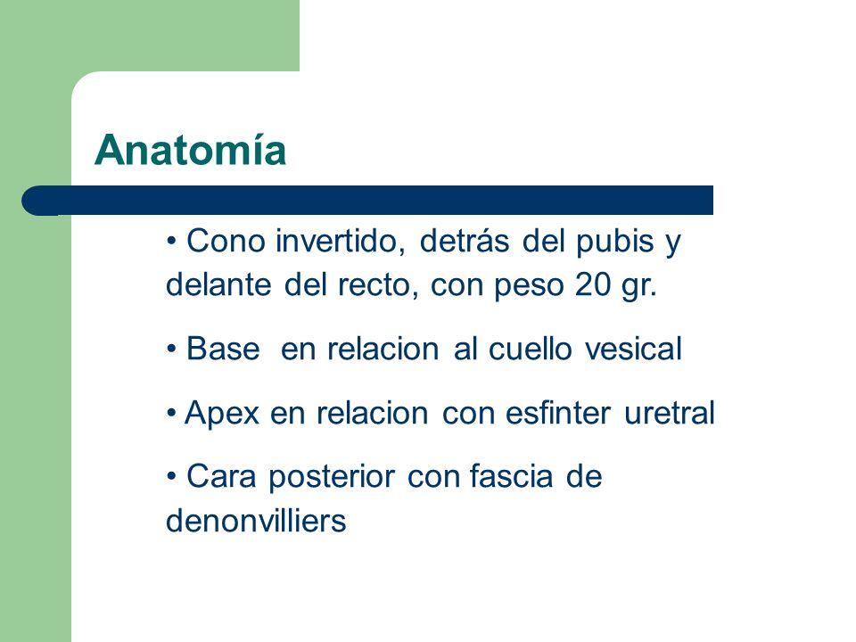 Anatomía Cono invertido, detrás del pubis y delante del recto, con peso 20 gr. Base en relacion al cuello vesical.