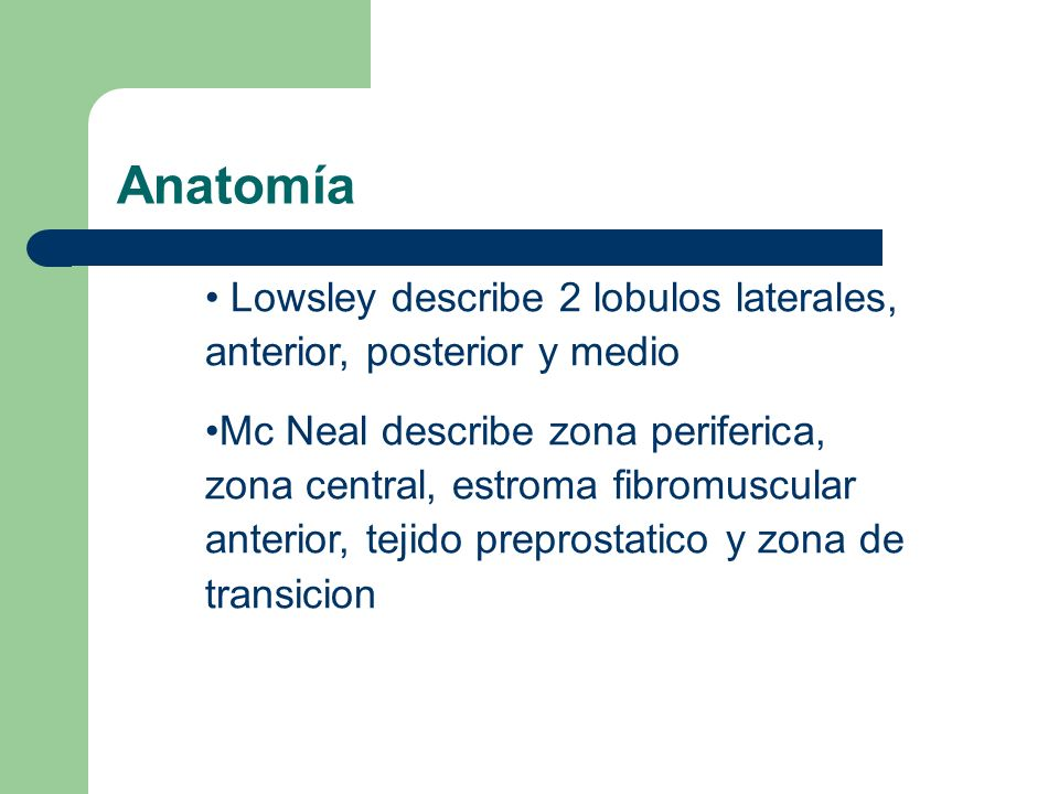 AnatomíaLowsley describe 2 lobulos laterales, anterior, posterior y medio.