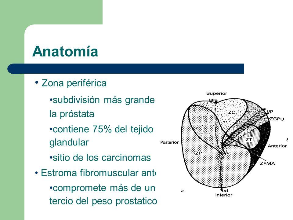 Anatomía Zona periférica subdivisión más grande de la próstata