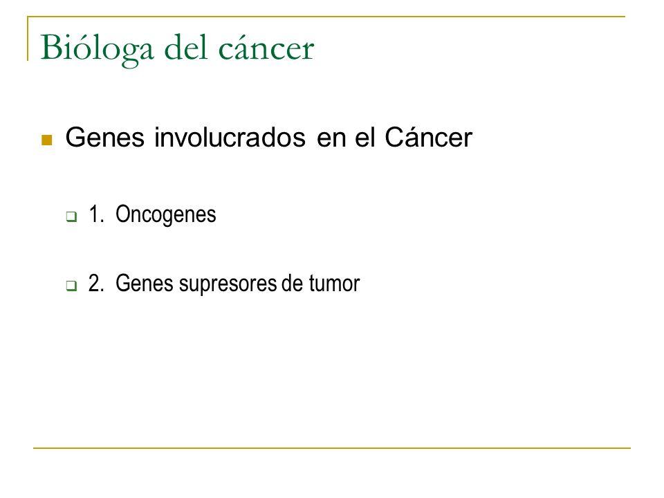 Bióloga del cáncer Genes involucrados en el Cáncer 1. Oncogenes