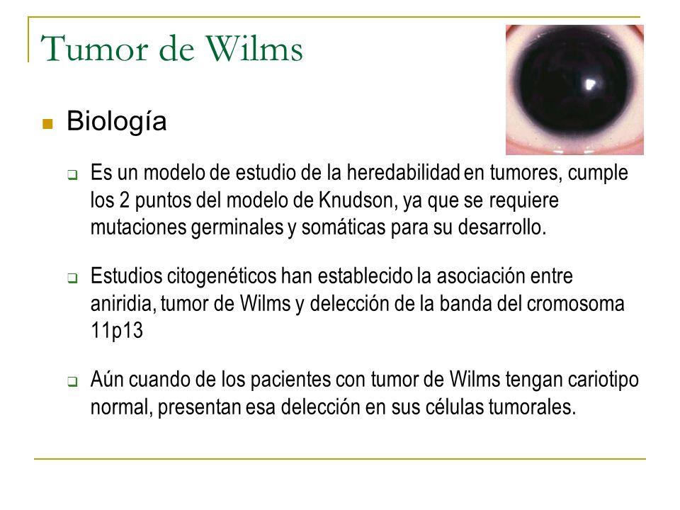 Tumor de Wilms Biología