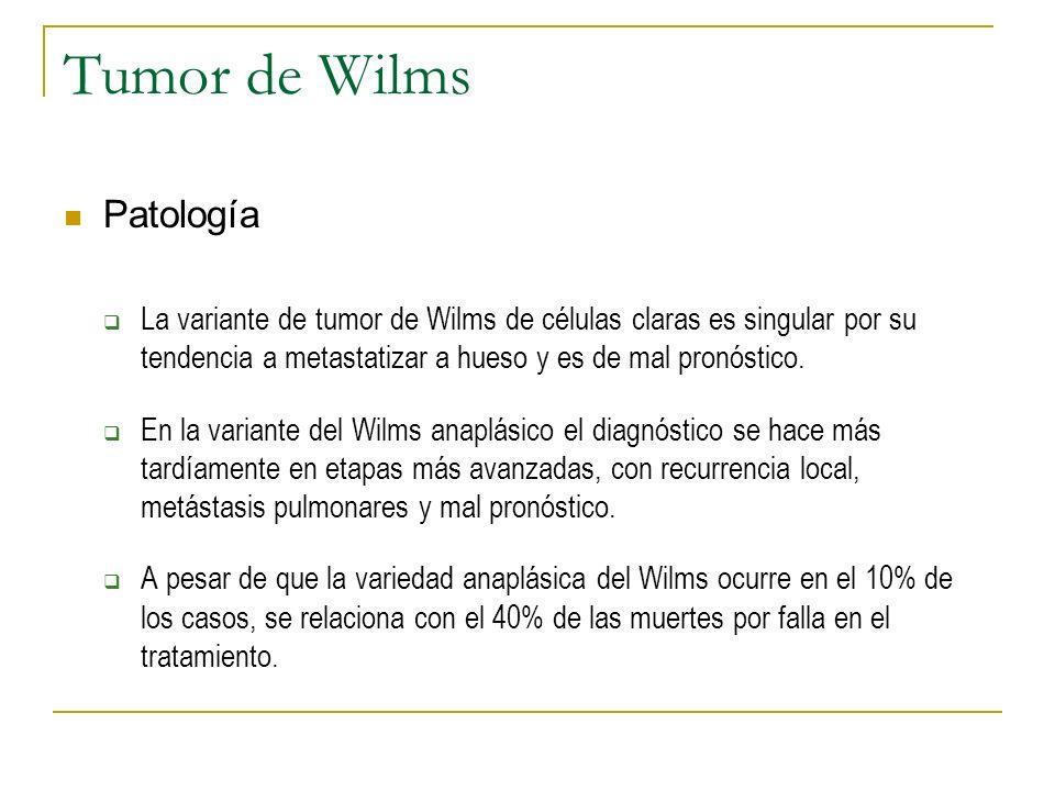Tumor de Wilms Patología