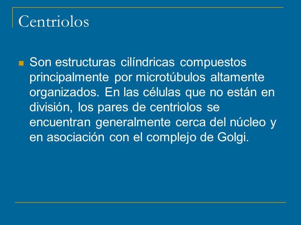 Centriolos