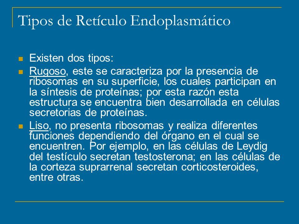 Tipos de Retículo Endoplasmático