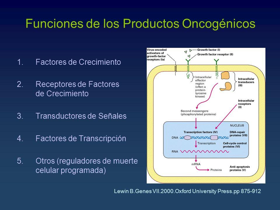 Funciones de los Productos Oncogénicos
