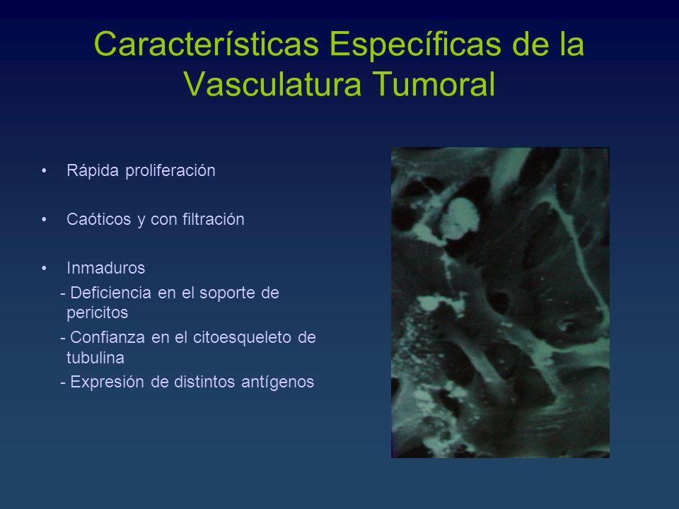 Características Específicas de la Vasculatura Tumoral