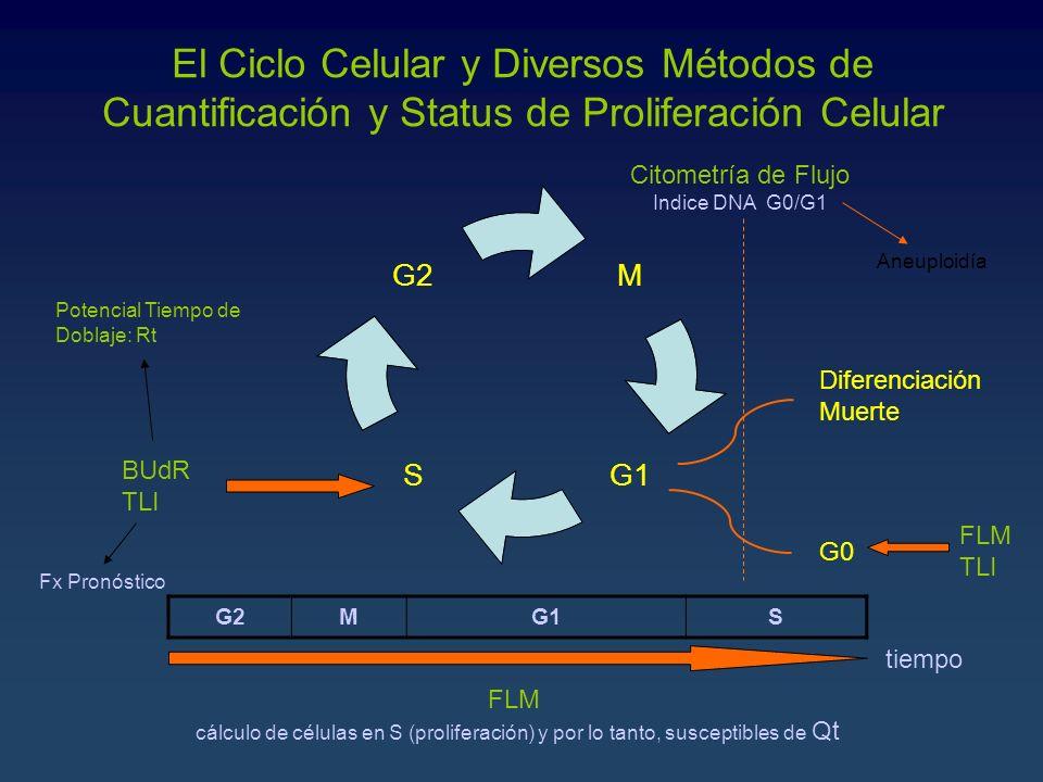 El Ciclo Celular y Diversos Métodos de Cuantificación y Status de Proliferación Celular