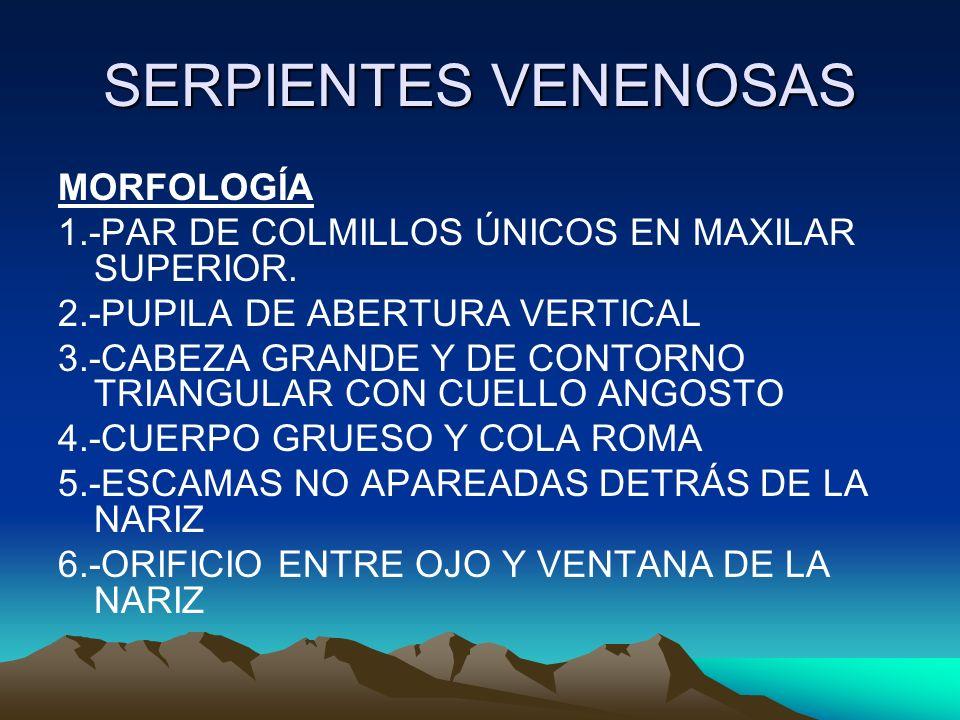 SERPIENTES VENENOSAS MORFOLOGÍA