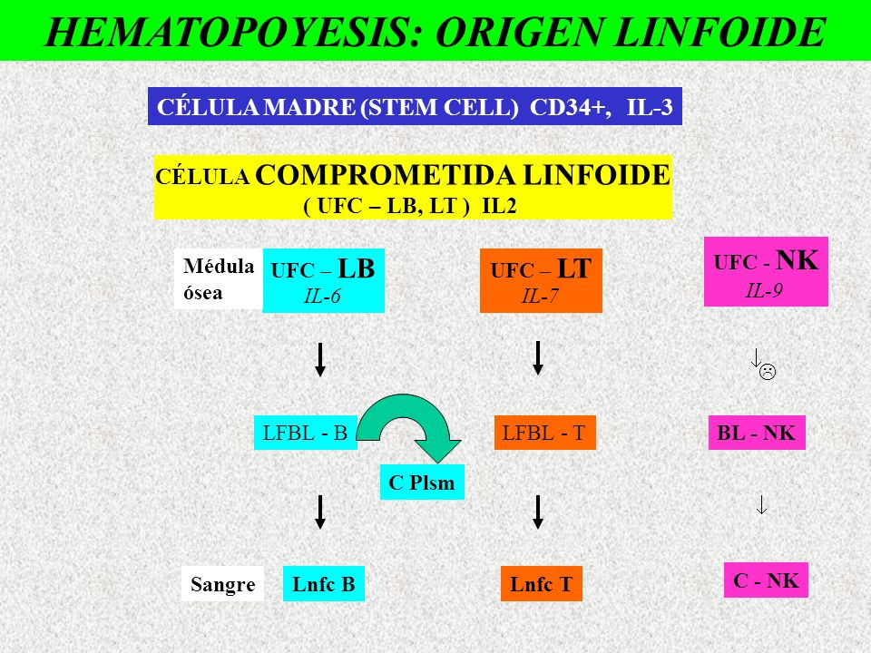 HEMATOPOYESIS: ORIGEN LINFOIDE
