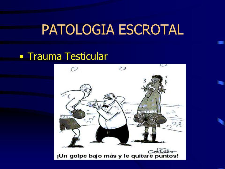 PATOLOGIA ESCROTAL Trauma Testicular