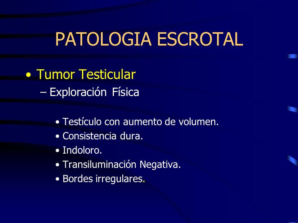 PATOLOGIA ESCROTAL Tumor Testicular Exploración Física
