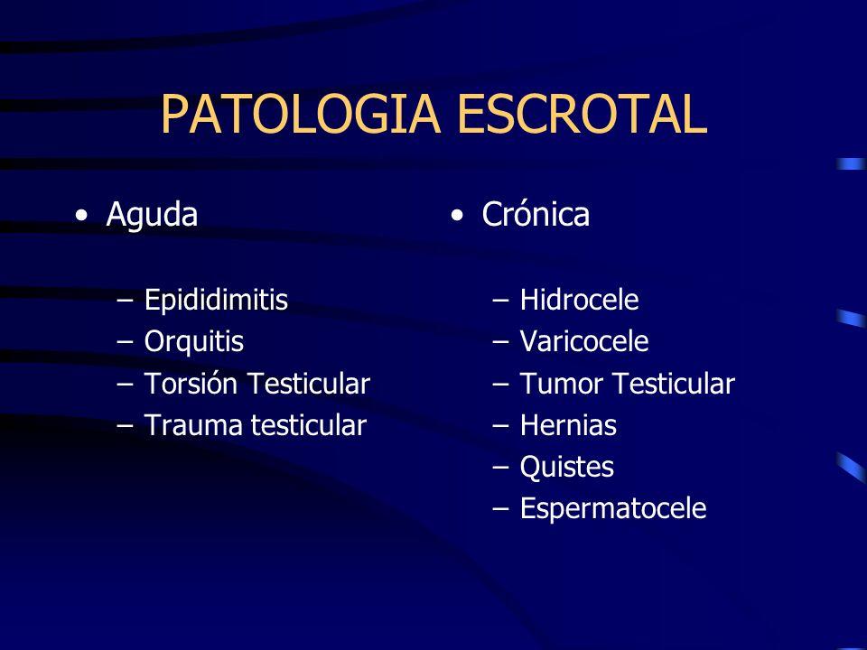 PATOLOGIA ESCROTAL Aguda Crónica Epididimitis Orquitis