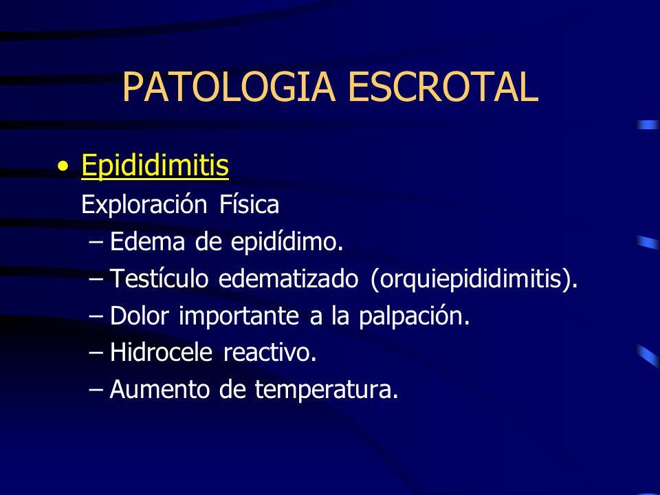 PATOLOGIA ESCROTAL Epididimitis Exploración Física Edema de epidídimo.