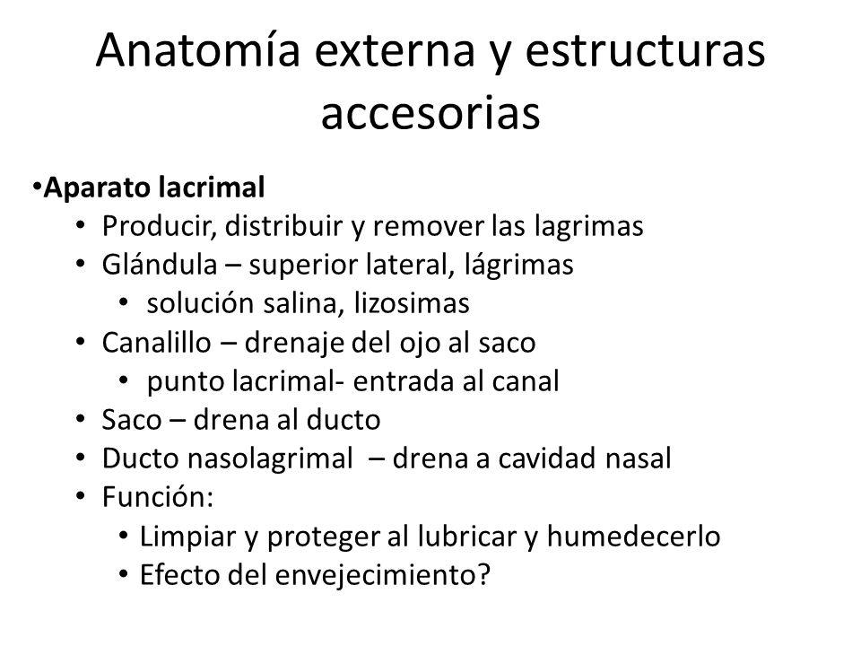 Increíble Anatomía De Las Lágrimas Friso - Anatomía de Las ...
