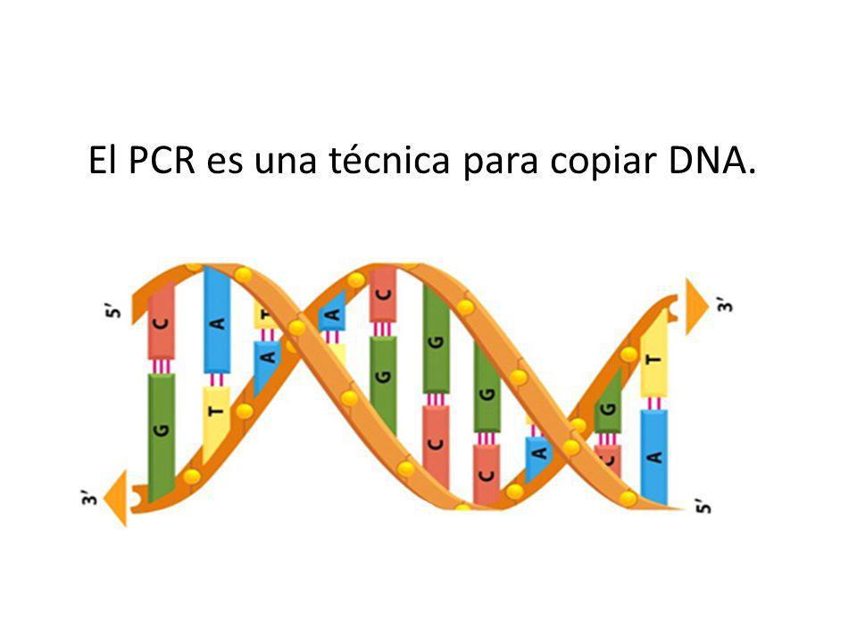 El PCR es una técnica para copiar DNA.
