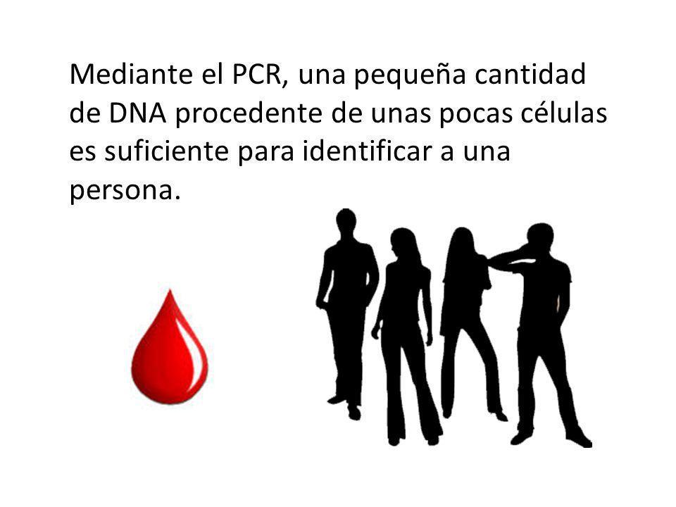 Mediante el PCR, una pequeña cantidad de DNA procedente de unas pocas células es suficiente para identificar a una persona.