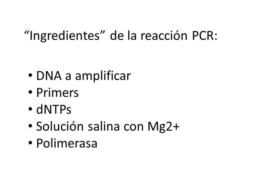 Ingredientes de la reacción PCR: