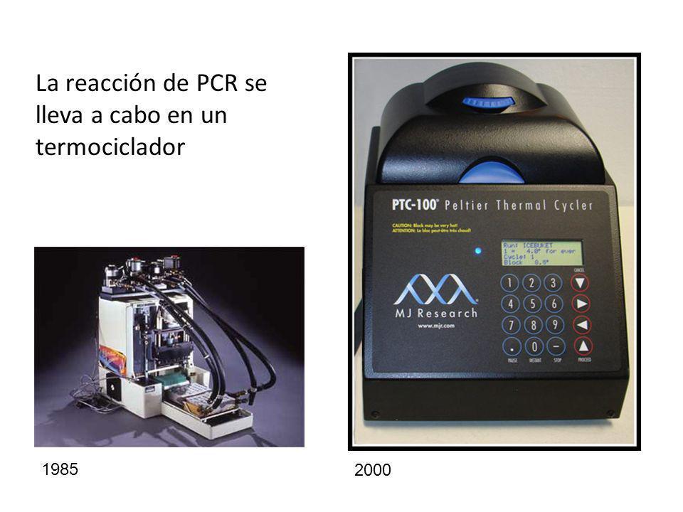 La reacción de PCR se lleva a cabo en un termociclador