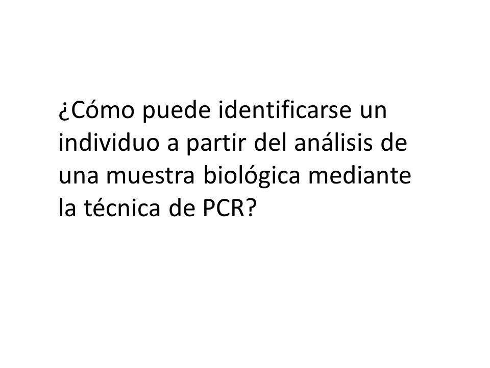 ¿Cómo puede identificarse un individuo a partir del análisis de una muestra biológica mediante la técnica de PCR