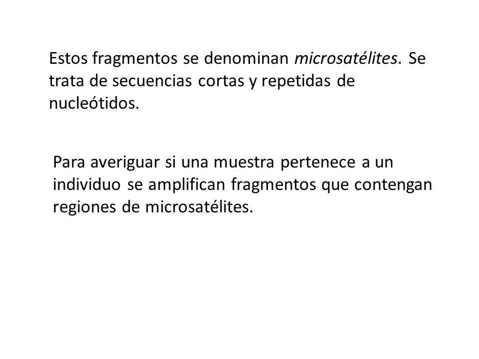 Estos fragmentos se denominan microsatélites