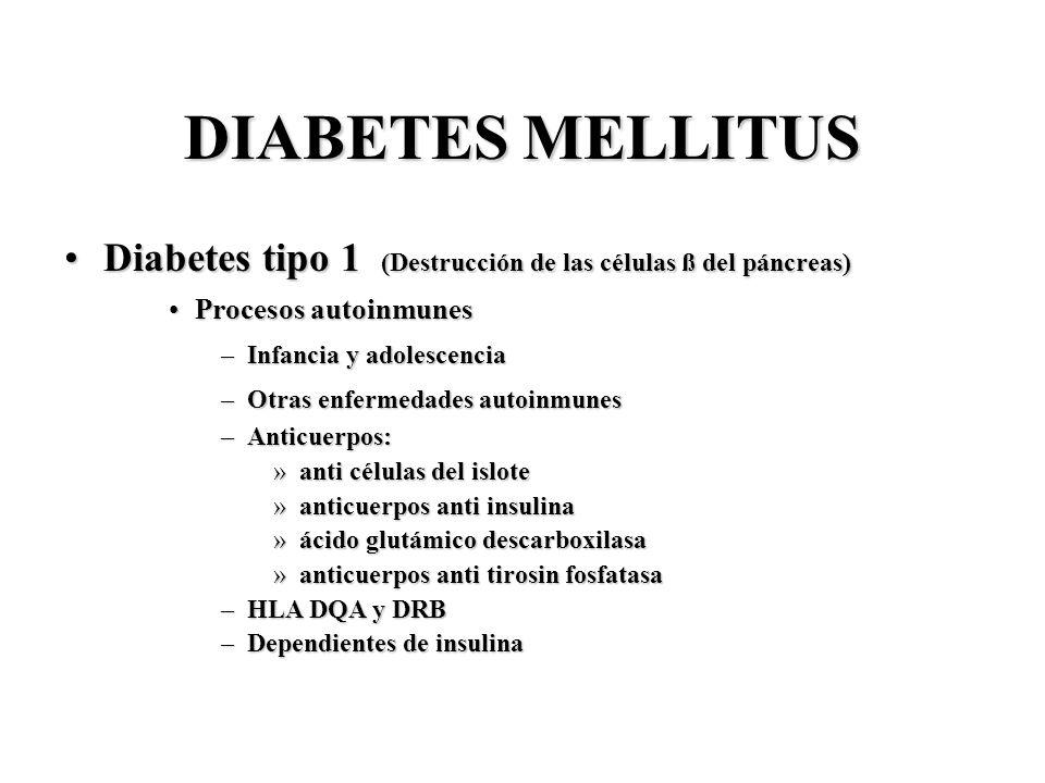 DIABETES MELLITUS Diabetes tipo 1 (Destrucción de las células ß del páncreas) Procesos autoinmunes.