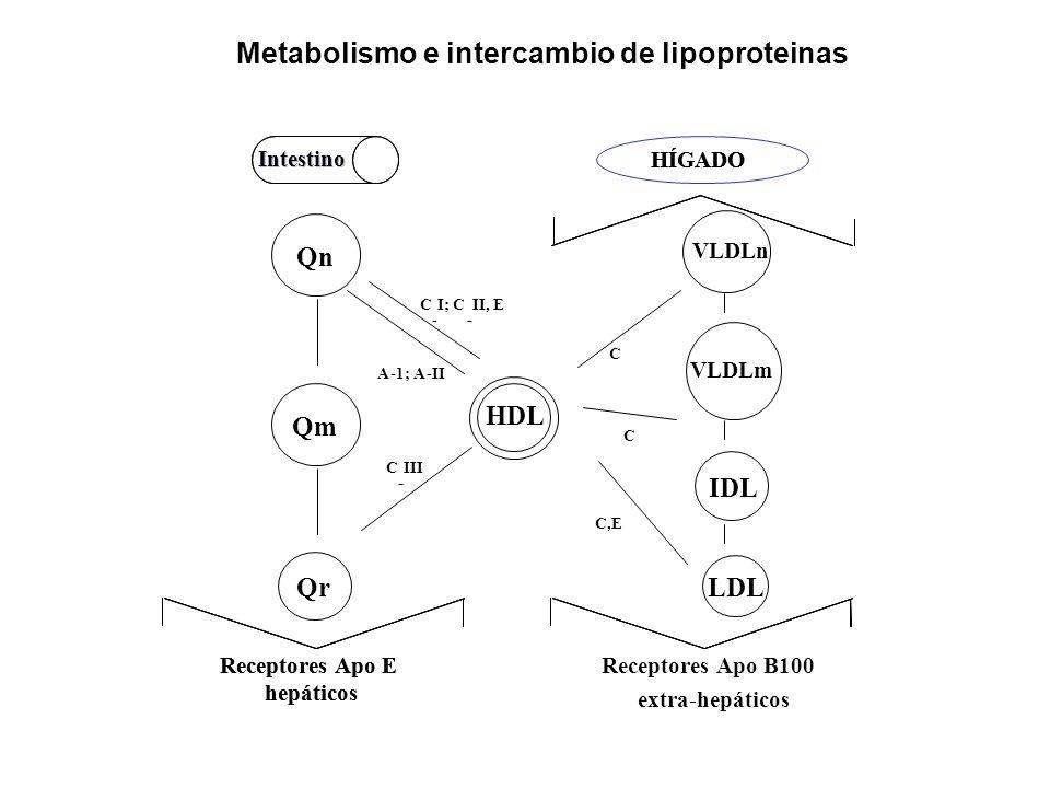 Metabolismo e intercambio de lipoproteinas