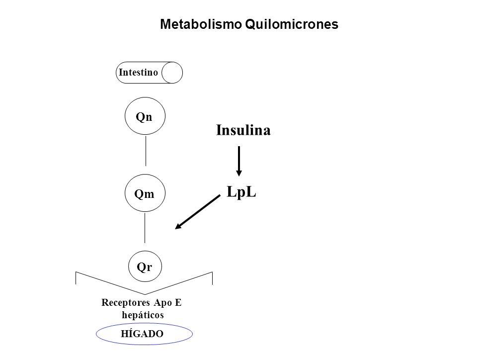 Insulina LpL Metabolismo Quilomicrones Qn Qm Qr Intestino