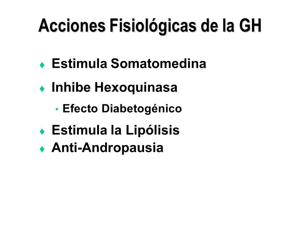 Acciones Fisiológicas de la GH