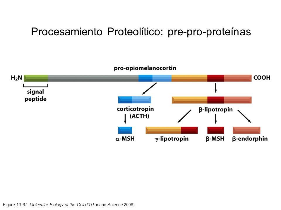 Procesamiento Proteolítico: pre-pro-proteínas