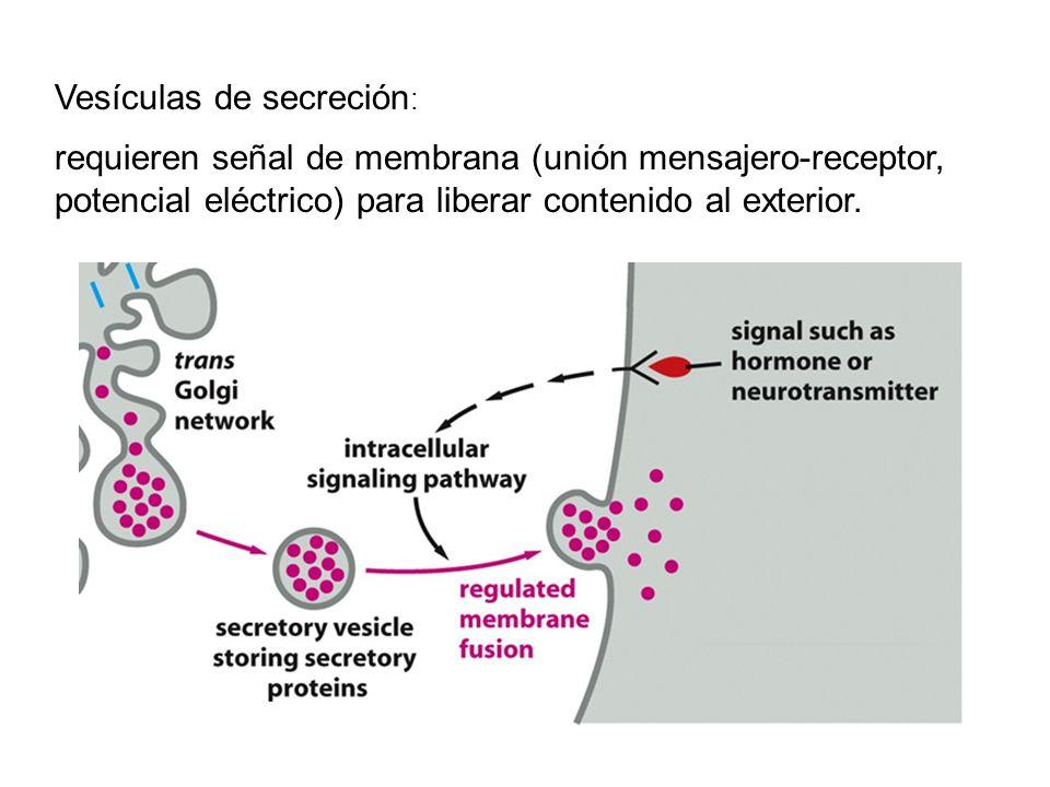 Vesículas de secreción: