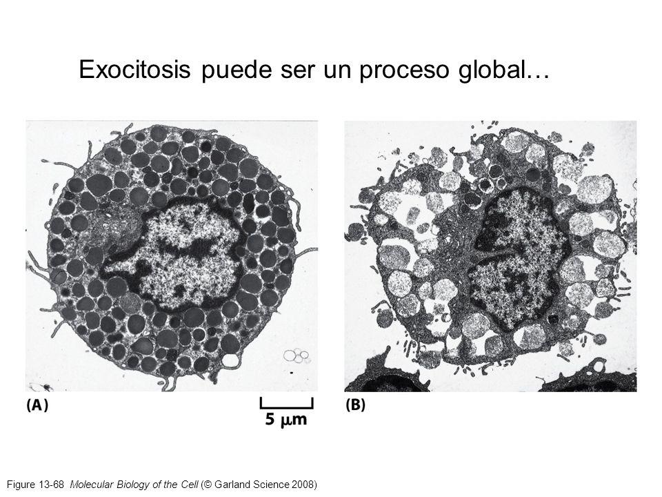 Exocitosis puede ser un proceso global…
