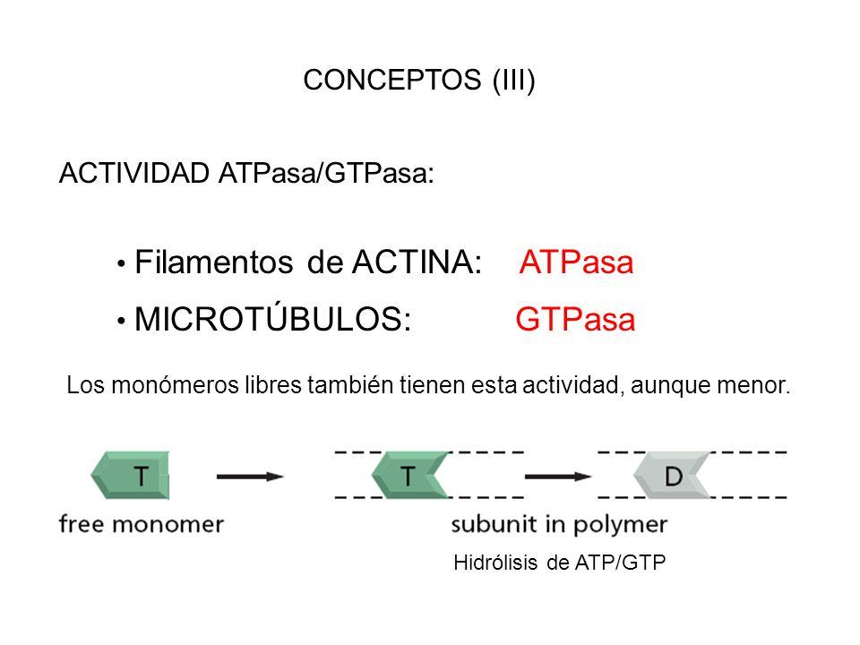 ACTIVIDAD ATPasa/GTPasa: