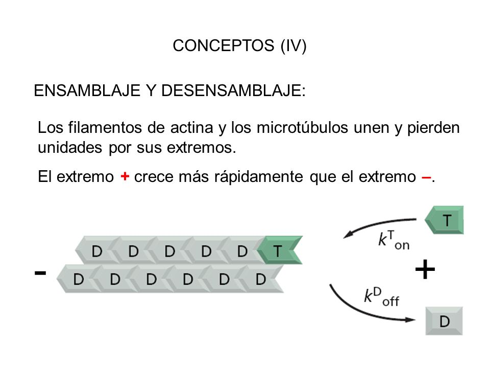 - + CONCEPTOS (IV) ENSAMBLAJE Y DESENSAMBLAJE: