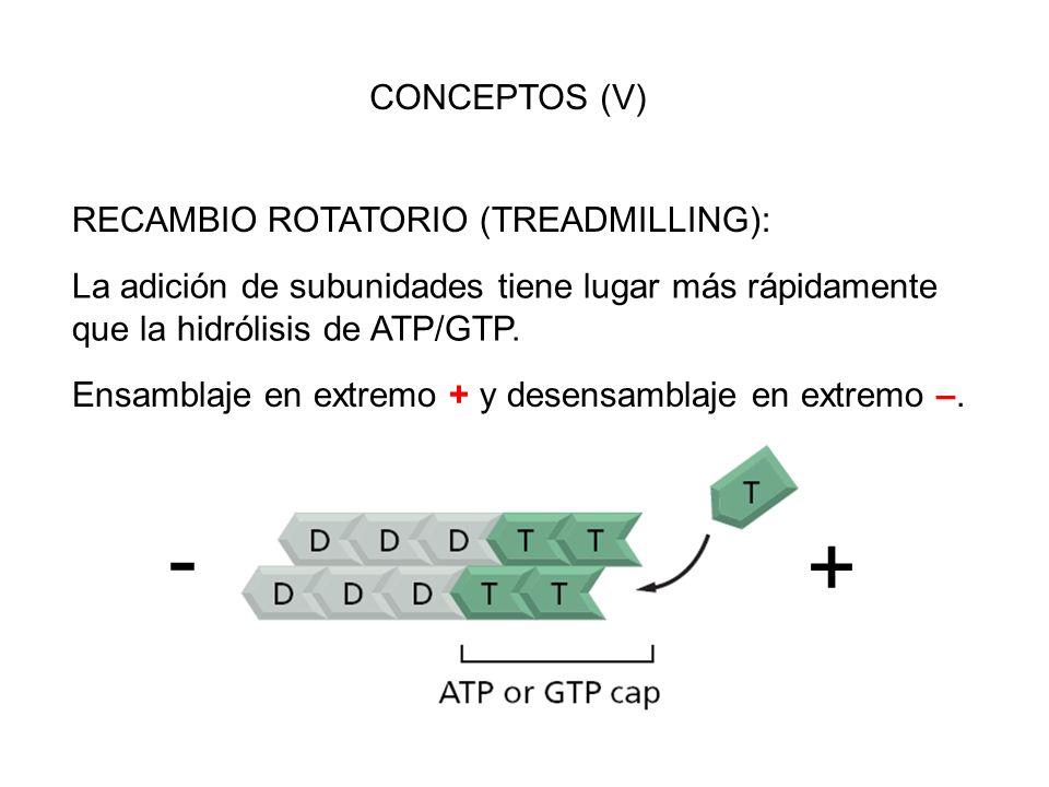 - + CONCEPTOS (V) RECAMBIO ROTATORIO (TREADMILLING):