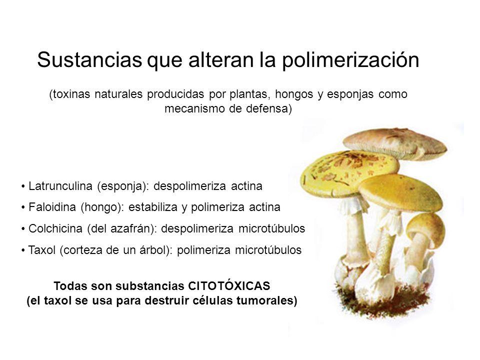 Sustancias que alteran la polimerización