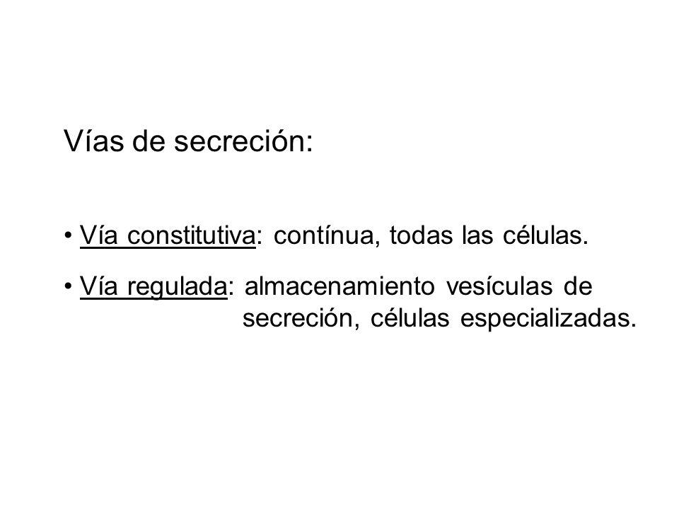 Vías de secreción: Vía constitutiva: contínua, todas las células.