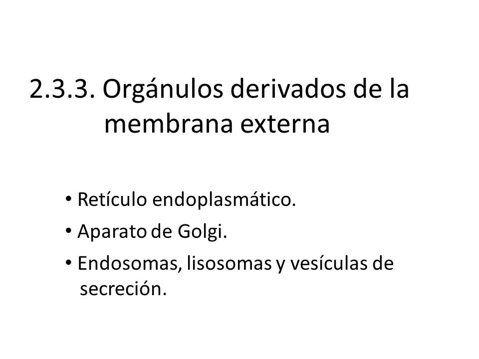 2.3.3. Orgánulos derivados de la membrana externa