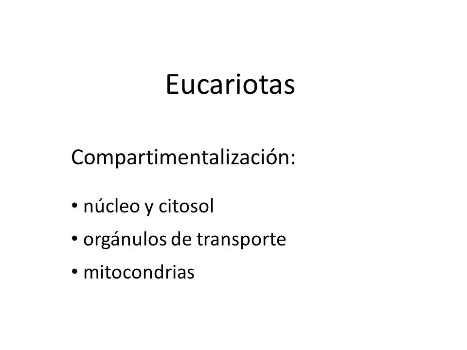 Eucariotas Compartimentalización: núcleo y citosol