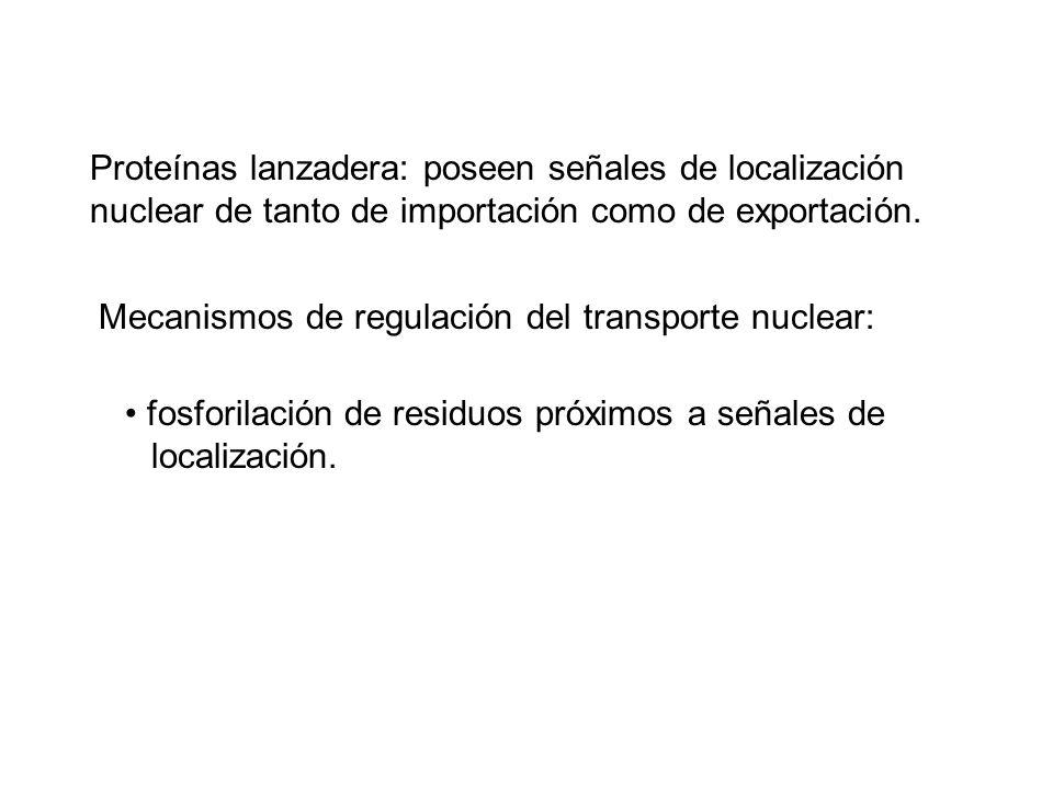 Proteínas lanzadera: poseen señales de localización nuclear de tanto de importación como de exportación.